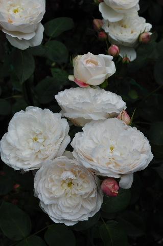 20120526 (76)