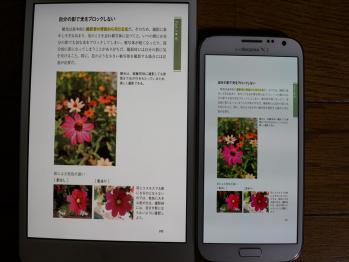 DSC00034R.jpg