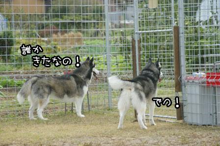 10_20121027204125.jpg