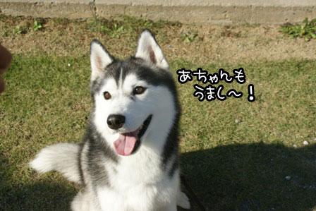 10_20121029211837.jpg