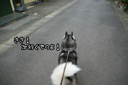 10_20121112201956.jpg