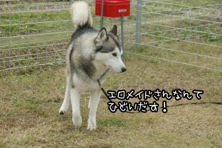 12_20121027204137.jpg