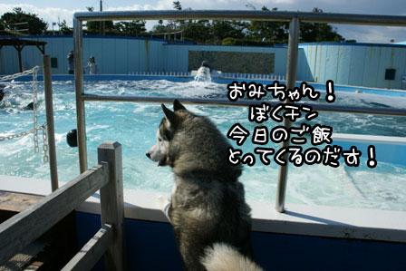 12_20121120200259.jpg