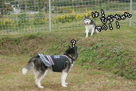 14_20121027204150.jpg