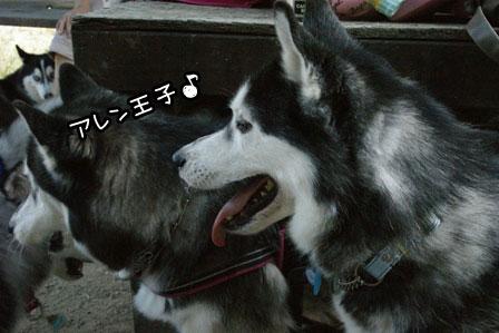 15_20120819201102.jpg