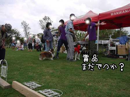 15_20121004195311.jpg