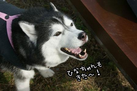 15_20121027204154.jpg