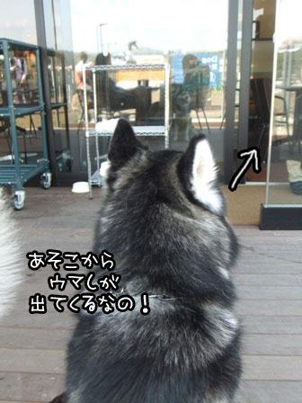 16_20120430144419.jpg