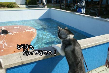 17_20121120200321.jpg