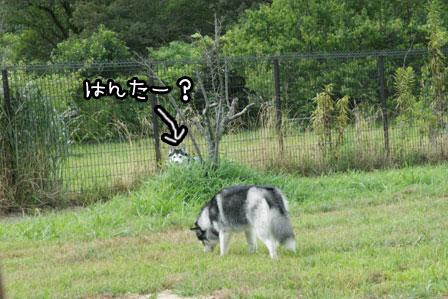 18_20120819201120.jpg
