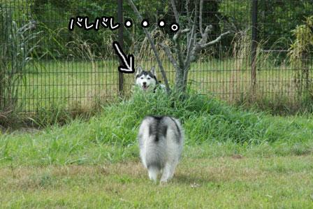 19_20120819201125.jpg