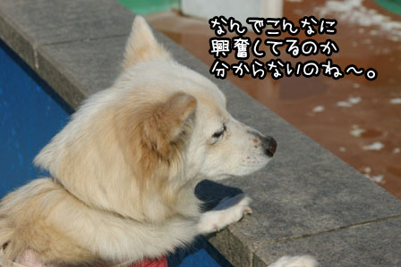 19_20121120200330.jpg