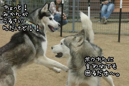 1_20120523205320.jpg