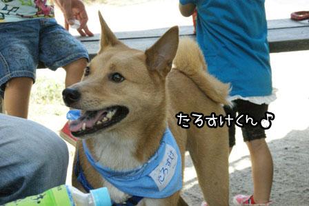 21_20120819201137.jpg