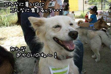 22_20120819201143.jpg