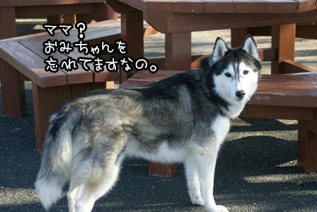 23_20121203213952.jpg