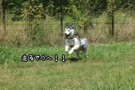 2_20120819200130.jpg