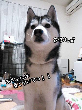 2_20130220223459.jpg