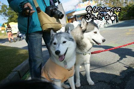 31_20121122215910.jpg