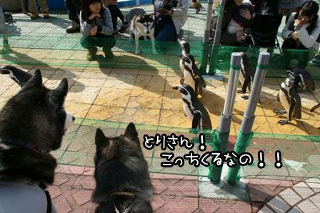 36_20121122215944.jpg