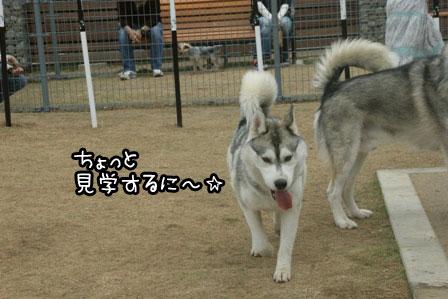 3_20120523205330.jpg