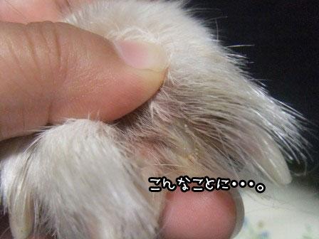 3_20121006195932.jpg