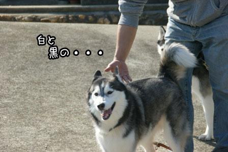 3_20121029211804.jpg