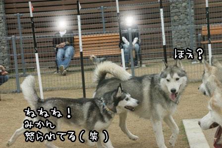 4_20120523205335.jpg