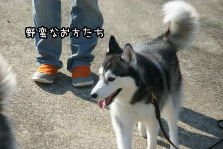 4_20121029211809.jpg