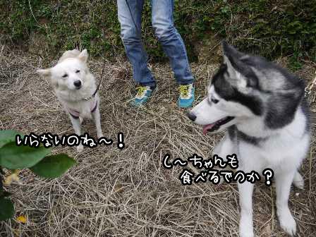 4_20121030222338.jpg