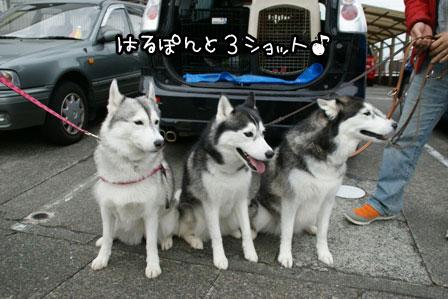 4_20121112201926.jpg