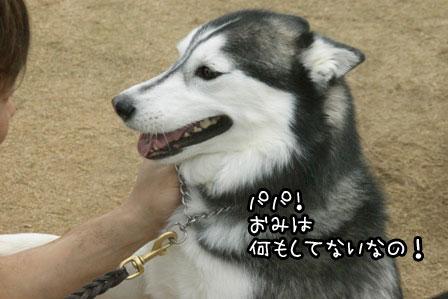5_20120523205340.jpg