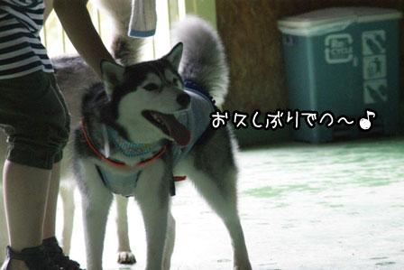 5_20120819200143.jpg
