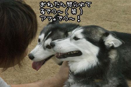 6_20120523205345.jpg