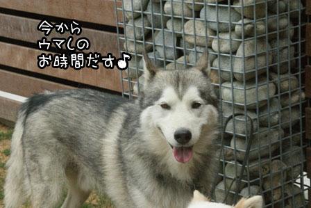 7_20120523205350.jpg