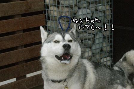 8_20120523205354.jpg