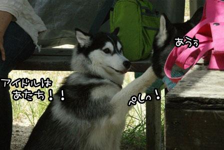 8_20120819200155.jpg
