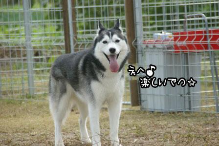 8_20121027204103.jpg
