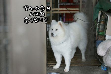 8_20121112201948.jpg