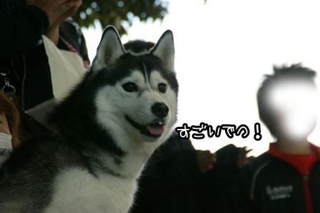 8_20121119202958.jpg