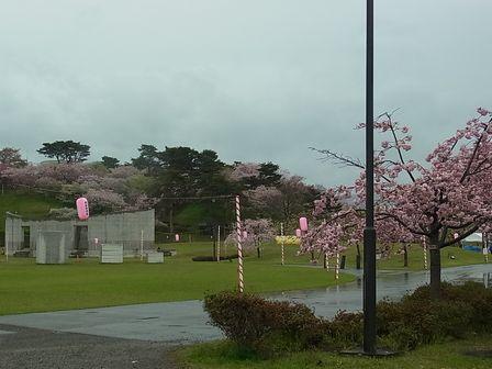 秋田 2012GW (9) 国花苑
