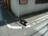 2012_05_27野毛付近 (15)