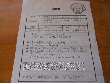 DSCしっぽN3627