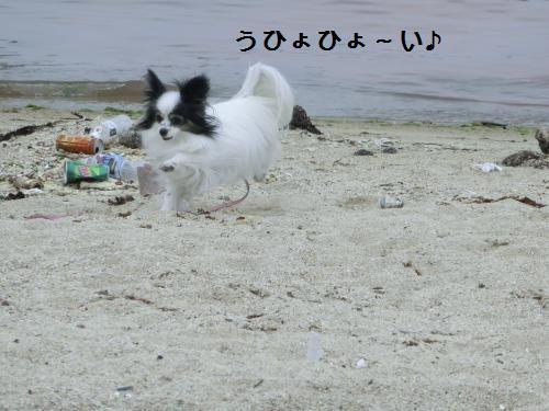 淡路島205302