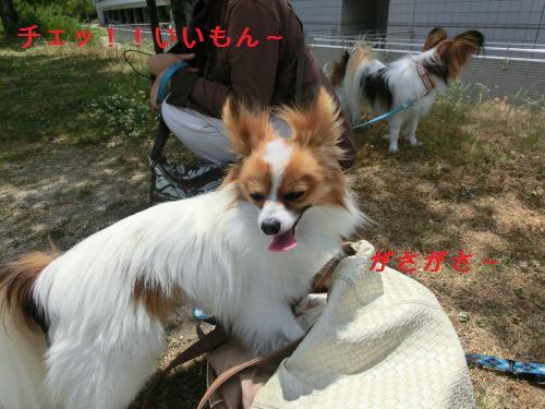 大津オフ2060127