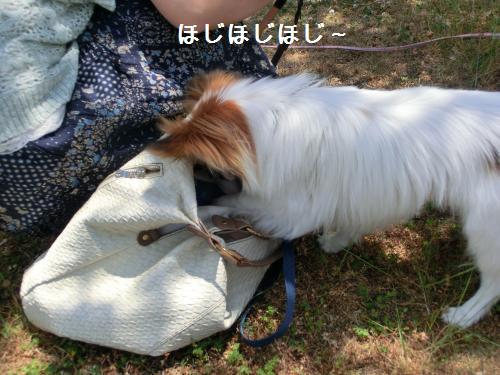 大津オフ2060121