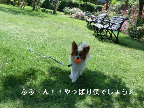 琵琶湖20601713
