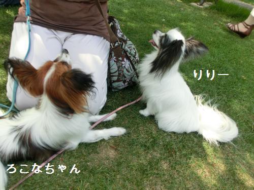 琵琶湖2060172
