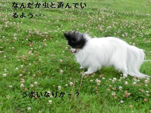 リリー206289