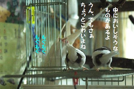 2DSC_2834m.jpg